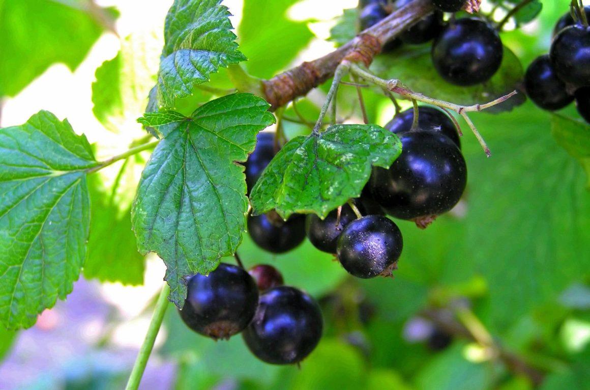 Врачи назвали самую полезную летнюю ягоду
